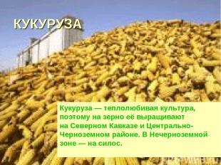 КУКУРУЗА Кукуруза— теплолюбивая культура, поэтому назерно еёвыращивают наСев