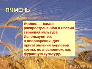 ЯЧМЕНЬ Ячмень— самая распространенная вРоссии зерновая культура. Используют ег