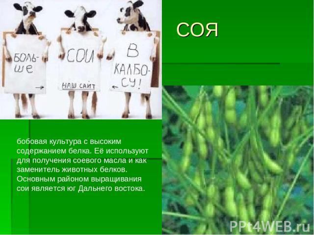СОЯ бобовая культура свысоким содержанием белка. Еёиспользуют для получения соевого масла икак заменитель животных белков. Основным районом выращивания сои является югДальнего востока.