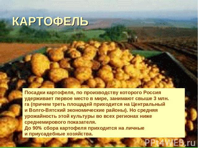 КАРТОФЕЛЬ Посадки картофеля, попроизводству которого Россия удерживает первое место вмире, занимают свыше 3млн. га(причем треть площадей приходится наЦентральный иВолго-Вятский экономические районы). Носредняя урожайность этой культуры вовсе…