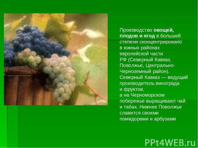 Производство овощей, плодов иягод вбольшей степени сконцентрировано вюжных районах европейской части РФ(Северный Кавказ, Поволжье, Центрально-Черноземный район). Северный Кавказ— ведущий производитель винограда ифруктов, анаЧерноморском побе…