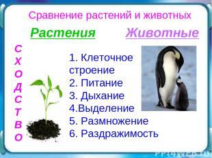 Сравнение растений и животных С Х О Д С Т В О Растения Животные 1. Клеточное стр