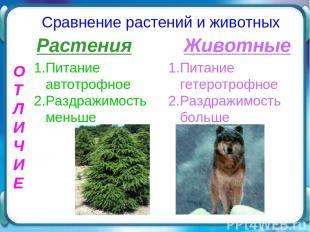 О Т Л И Ч И Е Сравнение растений и животных Растения Животные 1.Питание автотроф