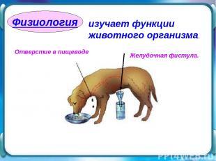 Физиология изучает функции животного организма. Отверстие в пищеводе Желудочная