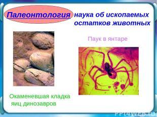 Палеонтология наука об ископаемых остатков животных Паук в янтаре Окаменевшая кл