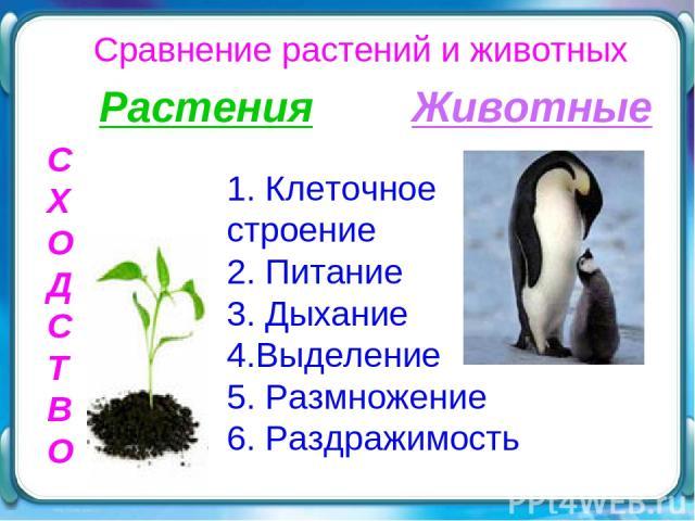 Сравнение растений и животных С Х О Д С Т В О Растения Животные 1. Клеточное строение 2. Питание 3. Дыхание 4.Выделение 5. Размножение 6. Раздражимость
