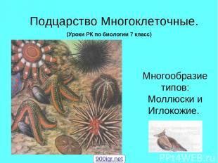 Подцарство Многоклеточные. Многообразие типов: Моллюски и Иглокожие. (Уроки РК п