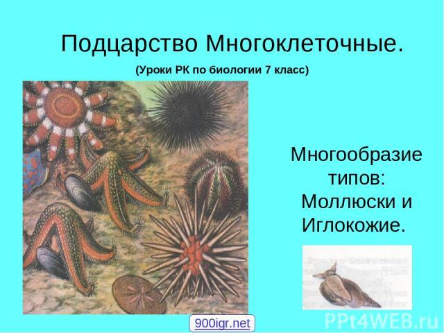 Подцарство Многоклеточные. Многообразие типов: Моллюски и Иглокожие. (Уроки РК по биологии 7 класс) 900igr.net