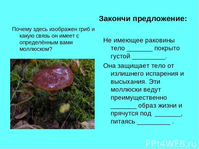 Закончи предложение: Почему здесь изображен гриб и какую связь он имеет с определённым вами моллюском? Не имеющее раковины тело _______ покрыто густой _________. Она защищает тело от излишнего испарения и высыхания. Эти моллюски ведут преимущественн…