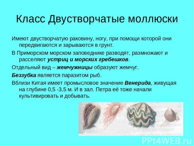 Класс Двустворчатые моллюски Имеют двустворчатую раковину, ногу, при помощи которой они передвигаются и зарываются в грунт. В Приморском морском заповеднике разводят, размножают и расселяют устриц и морских гребешков. Отдельный вид – жемчужницы обра…
