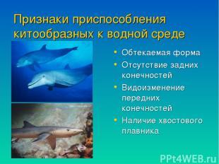 Признаки приспособления китообразных к водной среде обитания Обтекаемая форма От