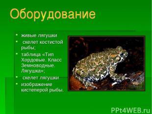 живые лягушки скелет костистой рыбы; таблица «Тип Хордовые. Класс Земноводные. Л