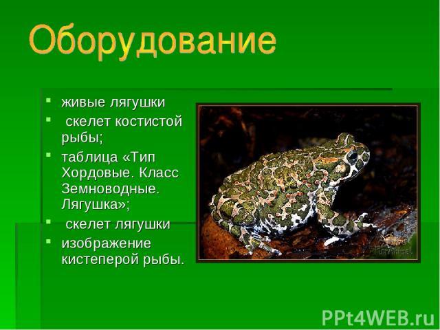 живые лягушки скелет костистой рыбы; таблица «Тип Хордовые. Класс Земноводные. Лягушка»; скелет лягушки изображение кистеперой рыбы.