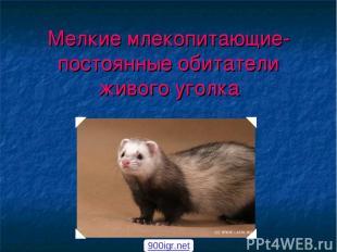 Мелкие млекопитающие- постоянные обитатели живого уголка 900igr.net