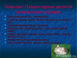 Подкласс Плацентарные делится на несколько отрядов: Насекомоядные (еж, землеройк
