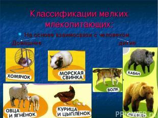 Классификации мелких млекопитающих: На основе взаимосвязи с человеком Домашние д