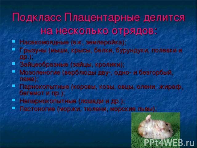 Подкласс Плацентарные делится на несколько отрядов: Насекомоядные (еж, землеройка); Грызуны (мыши, крысы, белки, бурундуки, полевки и др.); Зайцеобразные (зайцы, кролики); Мозоленогие (верблюды дву-, одно- и безгорбый, лама); Парнокопытные (коровы, …