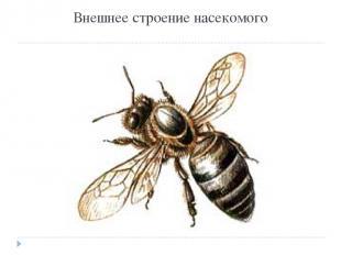 Внешнее строение насекомого