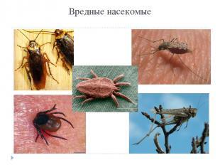 Вредные насекомые