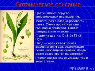 Ботаническое описание Цветкиимеют округло-колокольчатыйоколоцветник белого (р