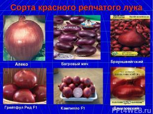 Сорта красного репчатого лука Алеко Багровый мяч Брауншвейгский Грейтфул Ред