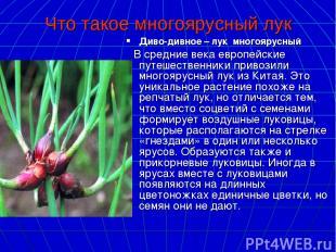 Что такое многоярусный лук Диво-дивное – лук многоярусный В средние века европей