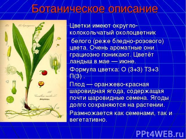 Ботаническое описание Цветкиимеют округло-колокольчатыйоколоцветник белого (реже бледно-розового) цвета. Очень ароматныеони грациозно поникают. Цветёт ландыш в мае— июне. Формула цветка:О (3+3) Т3+3 П(3). Плод— оранжево-краснаяшаровиднаяяг…