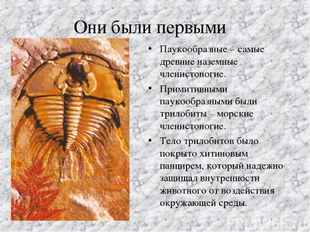 Они были первыми Паукообразные – самые древние наземные членистоногие. Примитивными паукообразными были трилобиты – морские членистоногие. Тело трилобитов было покрыто хитиновым панцирем, который надежно защищал внутренности животного от воздействия…