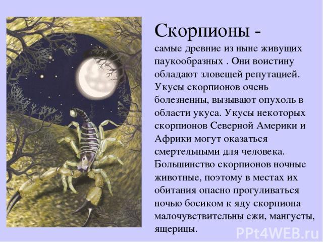 Скорпионы - самые древние из ныне живущих паукообразных . Они воистину обладают зловещей репутацией. Укусы скорпионов очень болезненны, вызывают опухоль в области укуса. Укусы некоторых скорпионов Северной Америки и Африки могут оказаться смертельны…