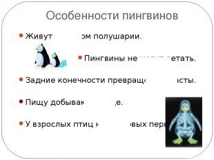 Особенности пингвинов Живут в южном полушарии. Пингвины не могут летать. Задние