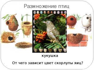 Размножение птиц Какая птица не строит гнезда? От чего зависит цвет скорлупы яиц