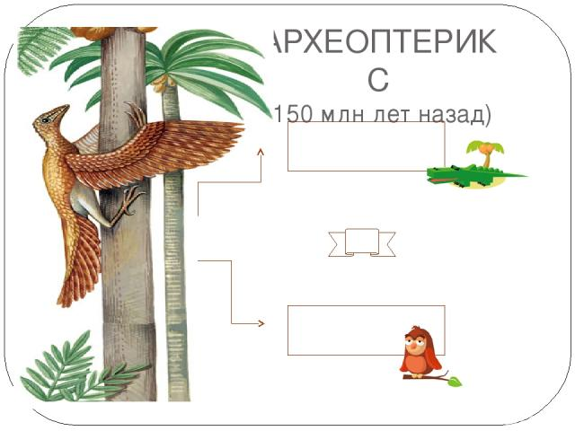 АРХЕОПТЕРИКС (150 млн лет назад) птицы рептилии № 2 Чешуи на задних ногах, ороговевший клюв. Перья развиваются из тех же кожных зачатков, что и чешуи рептилий