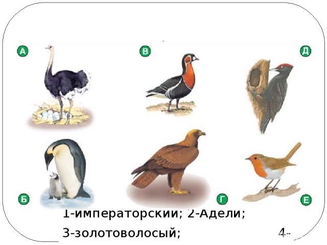 Многообразие птиц Отряд Пингвиныт пингвины: 1-императорский; 2-Адели; 3-золотоволосый; 4-антарктический Единственная птица, которая может плавать, но не может летать – кто это?