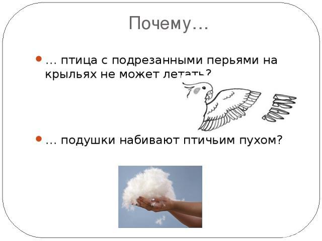 Почему… … птица с подрезанными перьями на крыльях не может летать? … подушки набивают птичьим пухом?