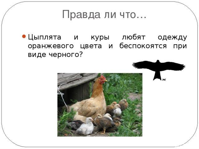 Правда ли что… Цыплята и куры любят одежду оранжевого цвета и беспокоятся при виде черного? силуэт коршуна. Голубиная почта