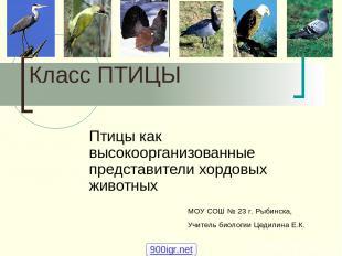 Класс ПТИЦЫ Птицы как высокоорганизованные представители хордовых животных МОУ С