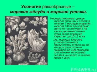 Усоногие ракообразные – морские жёлуди и морские уточки. Нередко покрывают днище
