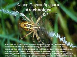 Класс Паукообразные Arachnoidea Arachnoidea происходит от греч. arachne – паук.