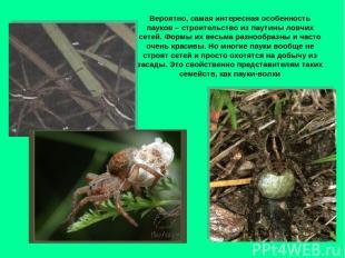 Вероятно, самая интересная особенность пауков – строительство из паутины ловчих