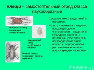 Клещи – самостоятельный отряд класса паукообразные Среди них много вредителей и