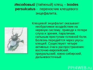 Иксодовый (таёжный) клещ – Ixodes persulcatus - переносчик клещевого энцефалита.