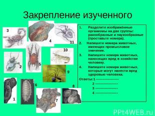 Закрепление изученного Разделите изображённые организмы на две группы: ракообраз