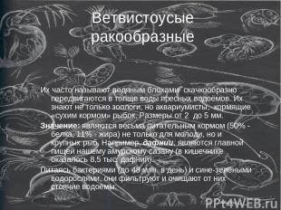 Ветвистоусые ракообразные Их часто называют водяным блохами- скачкообразно перед