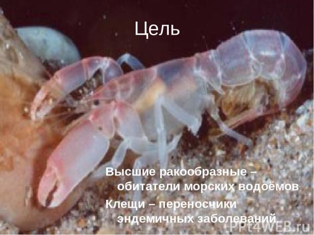 Цель Высшие ракообразные – обитатели морских водоёмов Клещи – переносчики эндемичных заболеваний.