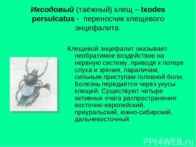 Иксодовый (таёжный) клещ – Ixodes persulcatus - переносчик клещевого энцефалита. Клещевой энцефалит оказывает необратимое воздействие на нервную систему, приводя к потере слуха и зрения, параличам, сильным приступам головной боли. Болезнь передаётся…