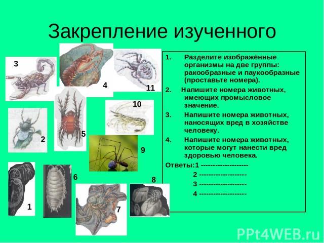 Закрепление изученного Разделите изображённые организмы на две группы: ракообразные и паукообразные (проставьте номера). 2. Напишите номера животных, имеющих промысловое значение. Напишите номера животных, наносящих вред в хозяйстве человеку. Напиши…
