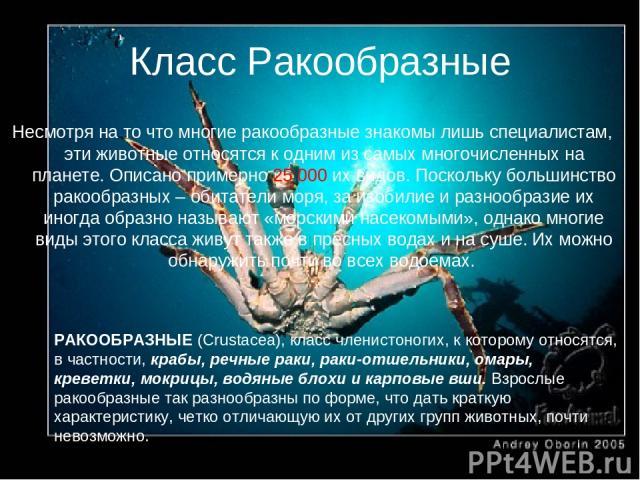 Класс Ракообразные РАКООБРАЗНЫЕ (Crustacea), класс членистоногих, к которому относятся, в частности, крабы, речные раки, раки-отшельники, омары, креветки, мокрицы, водяные блохи и карповые вши. Взрослые ракообразные так разнообразны по форме, что да…