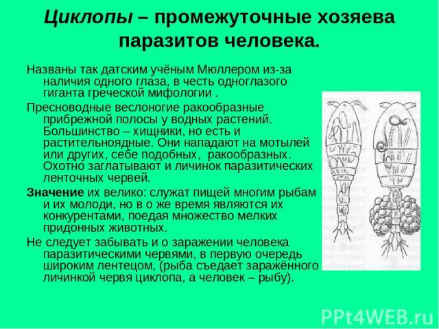 Циклопы – промежуточные хозяева паразитов человека. Названы так датским учёным Мюллером из-за наличия одного глаза, в честь одноглазого гиганта греческой мифологии . Пресноводные веслоногие ракообразные прибрежной полосы у водных растений. Большинст…
