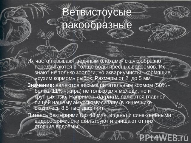 Ветвистоусые ракообразные Их часто называют водяным блохами- скачкообразно передвигаются в толще воды пресных водоёмов. Их знают не только зоологи, но аквариумисты, кормящие «сухим кормом» рыбок. Размеры от 2 до 5 мм. Значение: являются весьма питат…