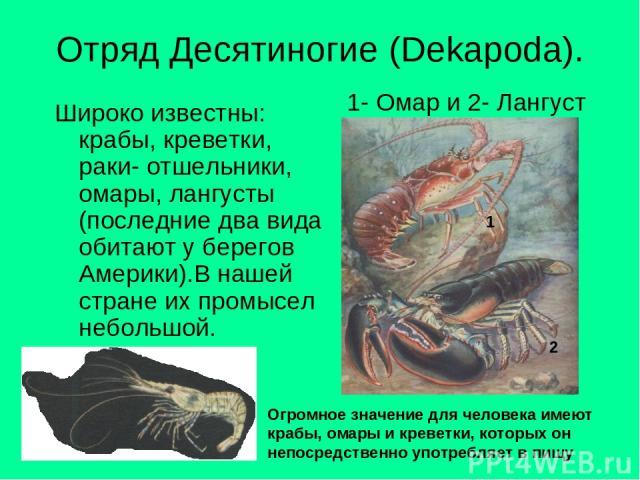 Отряд Десятиногие (Dekapoda). Широко известны: крабы, креветки, раки- отшельники, омары, лангусты (последние два вида обитают у берегов Америки).В нашей стране их промысел небольшой. 1- Омар и 2- Лангуст Огромное значение для человека имеют крабы, о…